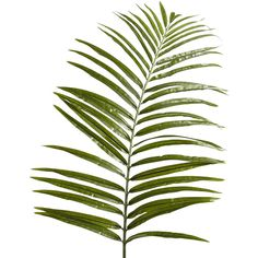 Pier 1 Imports Green Oversized Faux Areca Palm Stem ($8.98) ❤ liked on Polyvore featuring home, home decor, floral decor, plants, fillers, flowers, backgrounds, green, text and saying