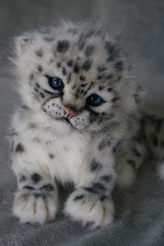 Snow Leopard by Natali Tsybina....too much cuteness here awwwwww