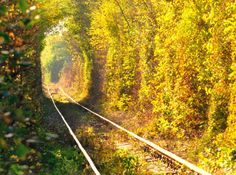 Tunnel of Love in Klevan, Ukraine. This railway engulfed in a tunnel of leaves is a Pinterest favorite and a Ukrainian hot spot for lovers. Although it's undoubtedly romantic, there is an active train that travels through the tunnel three times a day to deliver wood to a factory. Just beware of the train before snapping engagement photos!