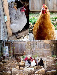 raising backyard chickens with kids