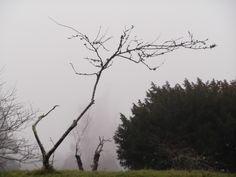 Árbore solitaria en Lavandeira.