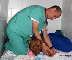 Lilly, a pit bull. pulled her unconscious human out of the way of an oncoming train. Unfortunately, the train hit Lilly and critically injured her. She is being treated with help from MSPCA-Angell's Pet Care Assistance Program. Photo links to more photos and video (nothing graphic).