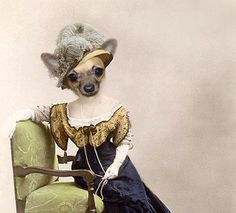 Heddy - Vintage Dog 5x7 Print - Anthropomorphic - Altered Photo - Chihuahua - Whimsical Animal Art - Photo Collage - Unusual Gift on Etsy, $15.00