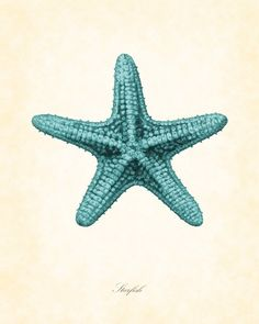 Vintage Starfish in Aqua 8 x 10 Natural History Art Print Beach Cottage Decor