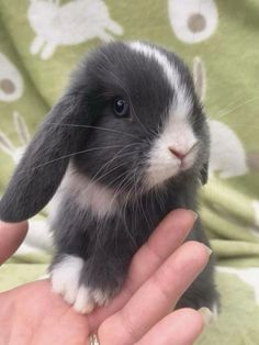 Cute bunny, funny bunnies, funny animals, animals and pets, adorable Cute Baby Bunnies, Funny Bunnies, Cute Babies, Cute Little Animals, Cute Funny Animals, Cute Dogs, Adorable Baby Animals, Bunny Care, Fluffy Bunny