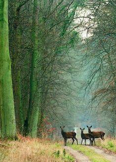 omgshowmetheworld:  Compiègne Forest, Oise, Picardy, France