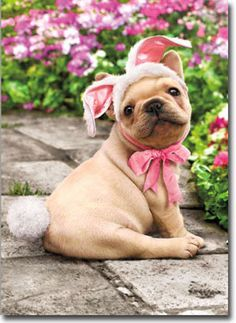 Dog-With-Bunny-Tail-Funny-Easter-Card-Greeting-Card-by-Avanti-Press