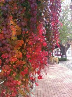 TAHİR GÜNDAY @TAHiRGUNDAY  Sonbahar da #bozcaada // Bozcaada Güz Autumn
