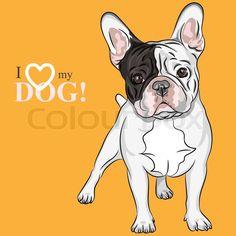Vektor sketch hunde Fransk Bulldog racen | Vektor | Colourbox on Colourbox