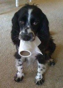 "Basic Dog Training Commands – ""Drop it"""
