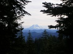Mt Belijica Trail - Mt. Adams through the trees, descending from Mt. Beljica. 4 miles RT, 1100 ft gain, SW Longmire/Paradise area of Mt. Rainier NP Photo by CRH.