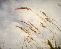 ❀༻ by Beth Lark on Etsy Eat Pray Love, Fields, Irish, Plants, Etsy, Google Search, Irish Language, Plant, Ireland