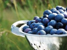 Grow Healthy, Delicious Blueberries