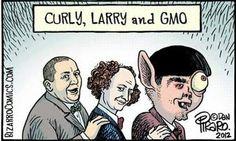 Curly, Larry & Gmo