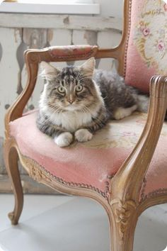 Perched and observing in her dainty chair.