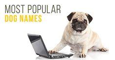 Cute Dog Names | I like Max, Finley/Finn, Hazel, Oliver, Ollie, Olive, Poppy, Leo, Marley, Marnie, Maui, Yuki, Kai, Coco, Ripley, Luna