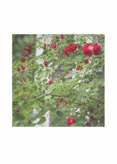Pañuelo De Seda - Floración De La Flor Por La Vida Vida GFaBYz
