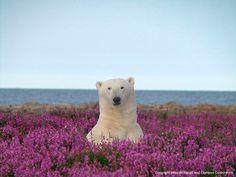 デジタル岩合 動物写真家・岩合光昭 カナダデジタルフォトギャラリー