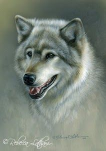 Silver Gray - Timber Wolf, 5in x 7in, watercolor on board, ©Rebecca Latham…