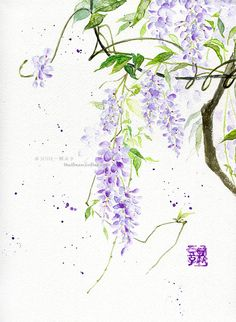 lovely wisteria asian watercolor Watercolor Flowers, Watercolor Paintings, Watercolours, China Art, Japan Art, Chinese Painting, Flower Art, Collages, Cool Art