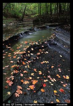 Fallen leaves and cascades, Brandywine Creek. Cuyahoga Valley National Park,Part of gallery of color pictures of US National Parks by professional photographer QT Luong, available as prints or for licensing. American National Parks, Us National Parks, Cuyahoga Falls Ohio, The Buckeye State, Toledo Ohio, Ohio River, Road Trip Usa, Beautiful Landscapes, Picture Photo