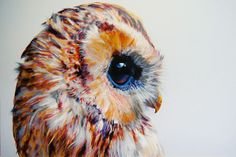 John Pusateri's stunningly hyper realistic owl drawing.