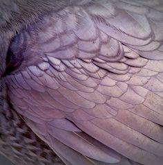 purple wings www.lab333.com https://www.facebook.com/pages/LAB-STYLE/585086788169863 http://www.labs333style.com www.lablikes.tumblr.com www.pinterest.com/labstyle