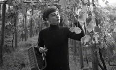Audrey Hepburn, picking grapes in her Italian vineyard, Get premium, high resolution news photos at Getty Images I Am The Messenger, Italian Vineyard, Audrey Hepburn Photos, Funny Faces, Image, People, Gregory Peck, Cinema, Classy Lady