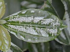 Golden Leaves, Plant Leaves, Plants, Plant, Planets