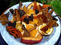 Feed butterflies with old fruit.  Put a larger plate or saucer of water under the fruit plate to keep away ants.