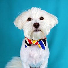 Multicoloured Striped Bowtie Collar, Handmade, Collar Accessories, Dog Gift Idea, Dog Dickie Bow, Dog Outfit, Dog Wedding Bowtie, Dog Gift