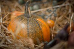 Pumpkin by Peterbrunner  IFTTT 500px
