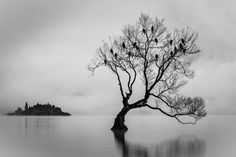 B& W  Birds of Lake Wanaka  by michellemckoy - Strong Foregrounds Photo Contest
