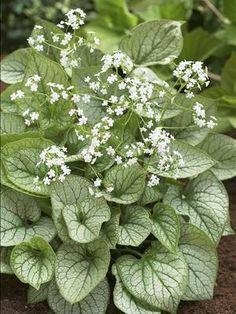 Image result for elegant white plants outdoor