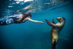 Loving this photo swimming with the sea lions at #espiritusanto in #seaofcortez #lapaz  off the #amaneceryacht #azimut #azimut105 #azimutyachts #yacht #yachts #yachtie #yachties #sealion #sealions @azimut_yachts @stregispuntamita @fspuntamita #fourseasons #fourseasonshotel #fourseasonspuntamita @mexicotravel @yachtchartersmexico @puertovallartamexico #lukeinmanphotography @luke_dog_walker @afelandrina by amaneceryacht