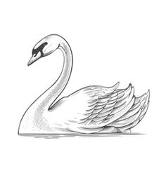 Swan in engraving style vector . Swan in engraving style vector Pencil Art Drawings, Bird Drawings, Art Drawings Sketches, Animal Drawings, Easy Drawings, Swan Painting, Mural Painting, Schwan Tattoo, Tatoo 3d