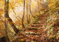 I want to walk a path like that. Won  der if that's what the stairway to h  eaven will be like, or maybe better.  ...yeah. Better.