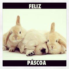 Feliz Páscoa !!