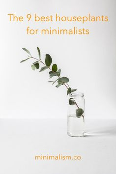 A minimalist home design can often call for a lot of whites, grays and muted colors. Livening up a room with these houseplants for minimalists can completely change the feel of your home. Check out the article for the 9 best plants to choose from. Planting Succulents, Planting Flowers, Benefits Of Indoor Plants, Types Of Houseplants, Minimalist House Design, Minimalist Fashion, Pothos Plant, Low Light Plants, Fast Growing Plants