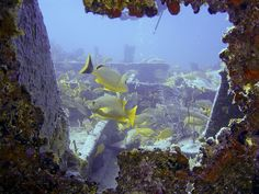 Benwood Wreck,Key Largo, FL,Photo by Kenny Rivera.   Benwood is a true wreck, awesome to dive,best night dive ever!!!
