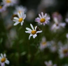 #whiteflowers #delicate #nautre #pretty