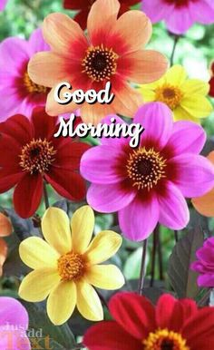 Good Morning. (With Beautiful Colourful Flowers)