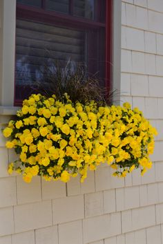 This is when Cool Wave Pansy does its thang! Perfect cool-season window box
