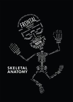 SKELETAL ANATOMY by Amy Kwan An informational poster displaying the hierarchy and organizational relationships with typography. In this case, type serves as both image and information on the skeletal anatomy.makes me think of xray school Med Student, Anatomy Art, Human Anatomy, Information Poster, Anatomy And Physiology, Medical School, School Nursing, Med School, High School