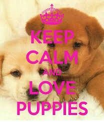 KEEP CALM AND LOVE PUPPIES. Another original poster design created with the Keep Calm-o-matic. Buy this design or create your own original Keep Calm design now. Puppy Quotes, Dog Quotes Love, Dog Quotes Funny, Funny Humor, Keep Calm Posters, Keep Calm Quotes, Funny Quotes Wallpaper, Funny Wallpapers, Wallpaper Ideas