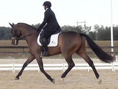 Amateur temperament with Pro quality. Talented enough for FEI, possibly International. 2007 Oldenburg gelding that started show career in 2012 competing Training level with scores to 76%! Now showing 1st again up to 70%. Fun horse to train! $50,000