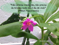 """""""Não precisa medo não, não precisa da timidez, todo dia é dia de viver."""" (Milton Nascimento)"""