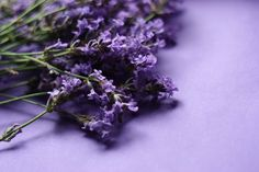 If you're sick of all the new & old bruises on your body, then you can learn to use essential oils for bruises (hematomas) and swelling and get rid of them. Essential Oil For Bruising, Best Essential Oils, Lavender Garden, Lavender Oil, Ayurveda, Easential Oils, Love Natural, Nature Plants, Natural Medicine
