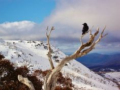 Blue Cow Lookout, Perisher Valley, New South Wales.
