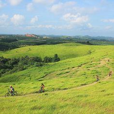 Lokasi/location:Bukit Rimpi, Pelaihari, Kalimantan Selatan . Rimpi Hills, Pelaihari, South Borneo .
